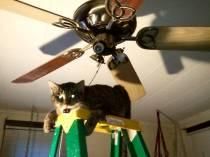 Creepy Cat Photo1